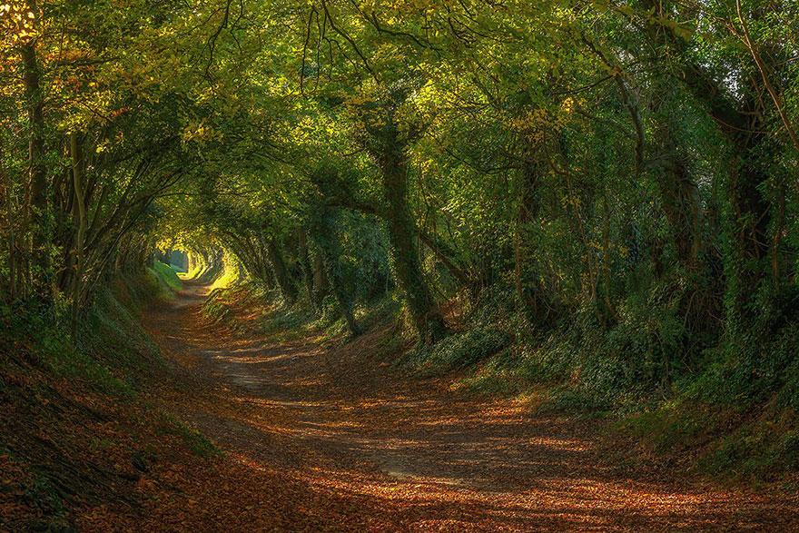 amazing-tree-tunnels-19