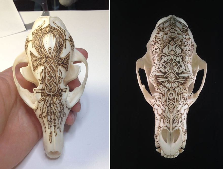 animal-skull-art-peter-deligdisch-11__880