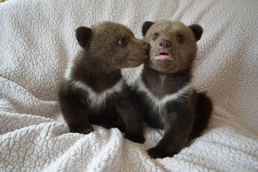 bear-cubs-shalom-wildlife-sanctuary-10__880