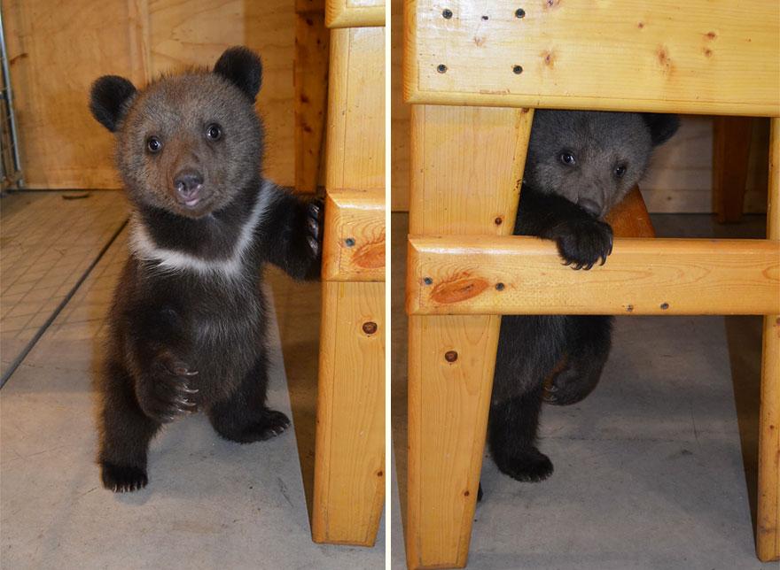 bear-cubs-shalom-wildlife-sanctuary-12__880