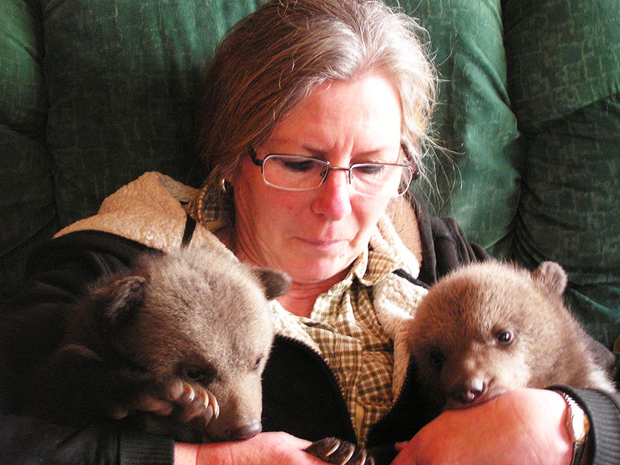 bear-cubs-shalom-wildlife-sanctuary-3__880