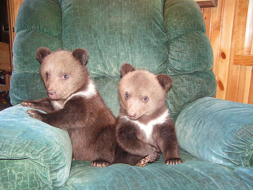 bear-cubs-shalom-wildlife-sanctuary-9__880