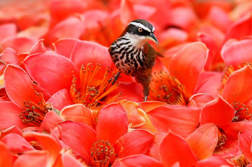 bird-photography-sue-hsu-10__880