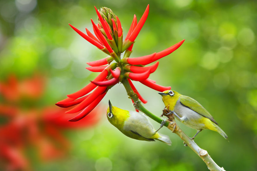 bird-photography-sue-hsu-11__880