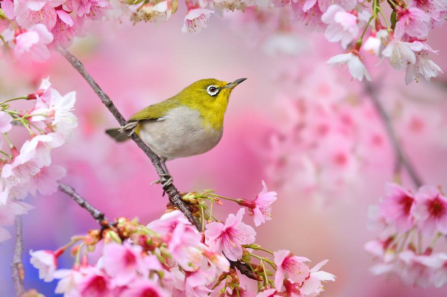 bird-photography-sue-hsu-12__880