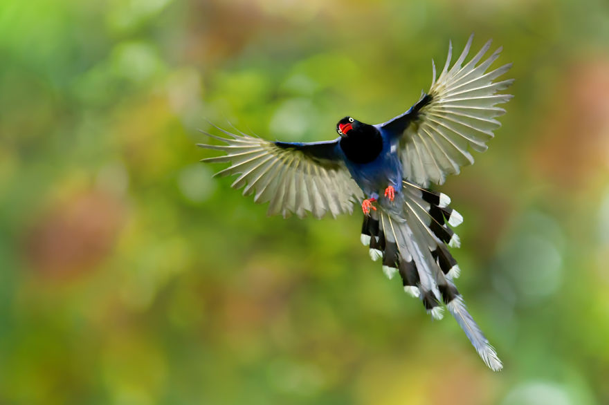 bird-photography-sue-hsu-13__880