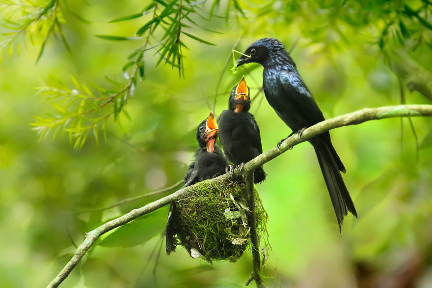 bird-photography-sue-hsu-14__880