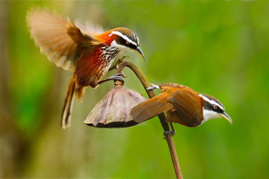 bird-photography-sue-hsu-15__880