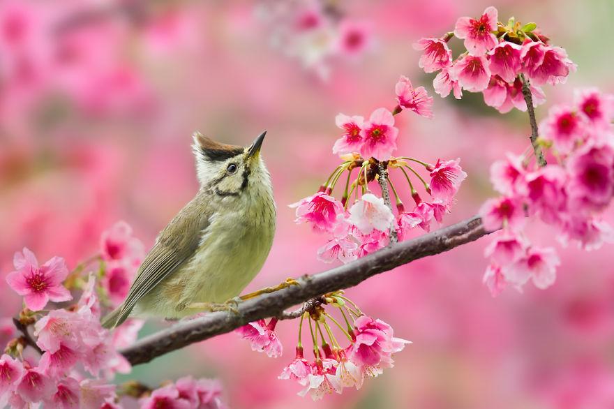 bird-photography-sue-hsu-16__880