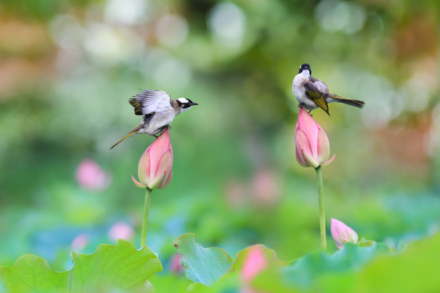 bird-photography-sue-hsu-1__880