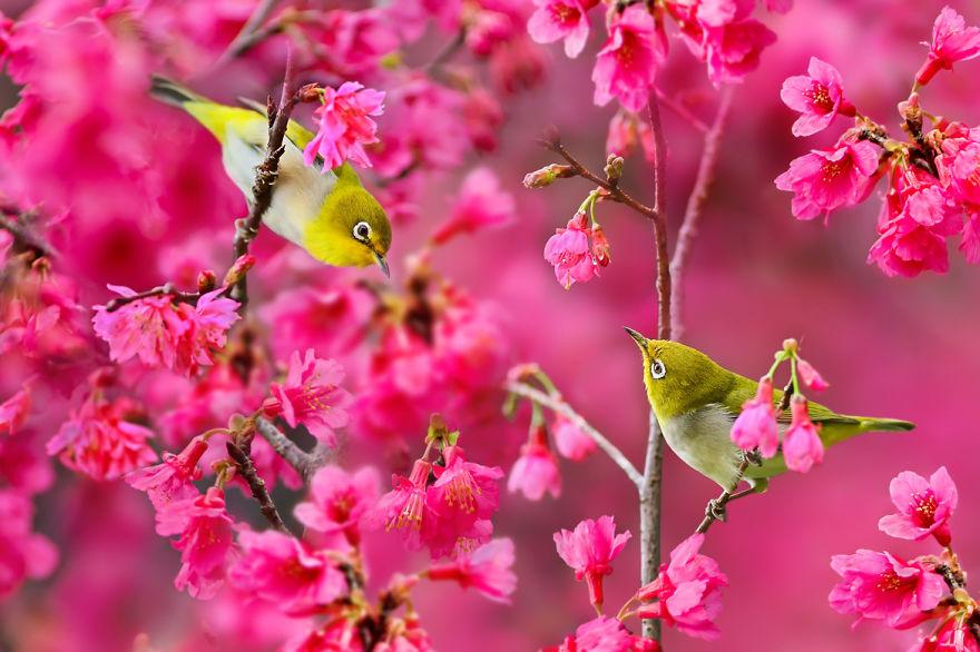 bird-photography-sue-hsu-2__880