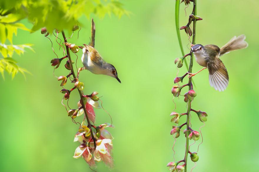 bird-photography-sue-hsu-3__880