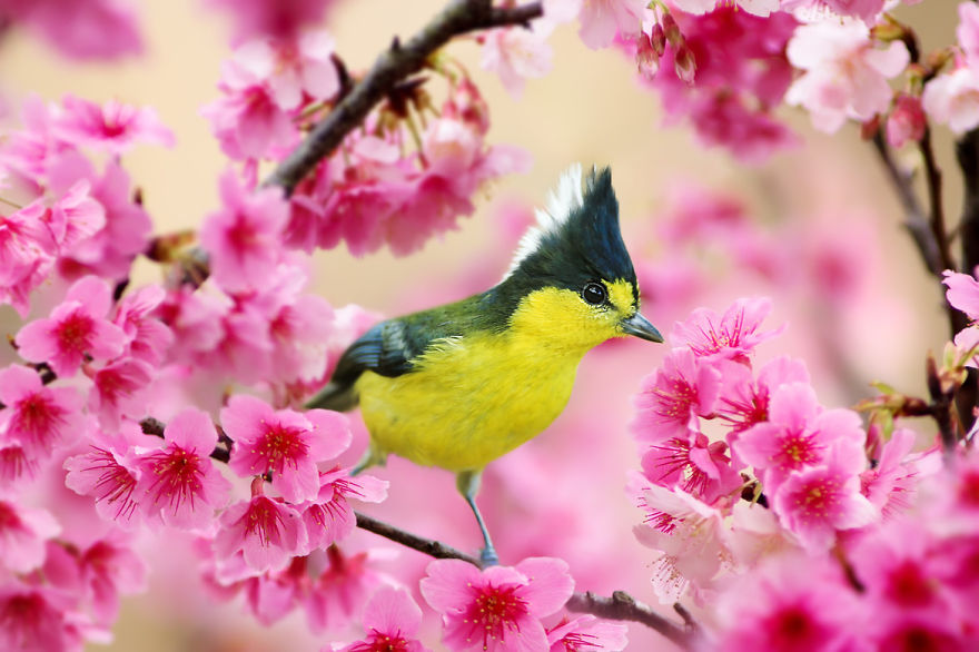 bird-photography-sue-hsu-4__880