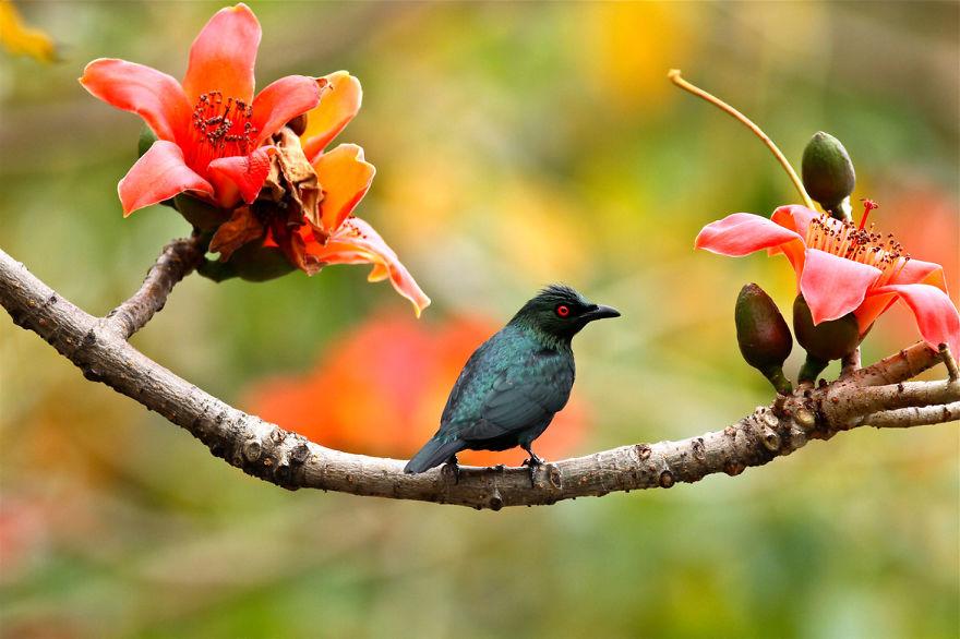 bird-photography-sue-hsu-5__880