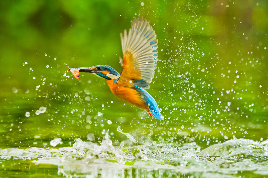 bird-photography-sue-hsu-6__880