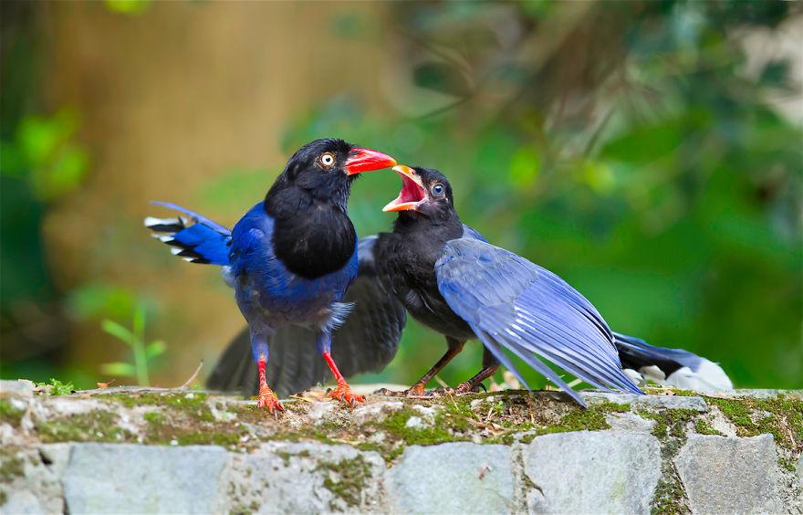bird-photography-sue-hsu-7__880