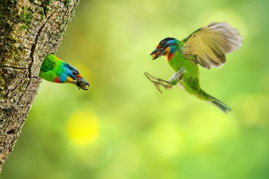 bird-photography-sue-hsu-8__880