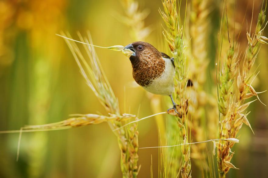 bird-photography-sue-hsu-9__880