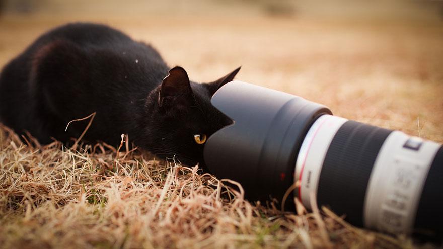 cat-portraits-seiji-mamiya-16