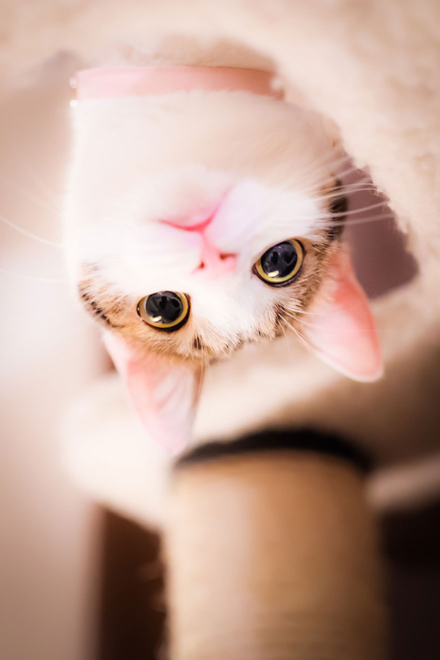 cat-portraits-seiji-mamiya-4