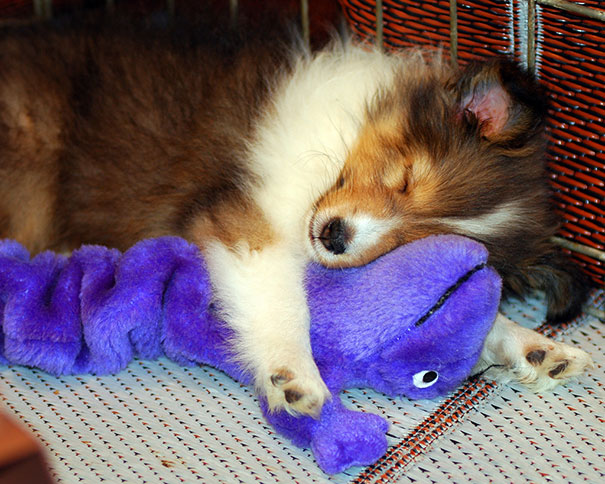 cute-animals-sleeping-stuffed-toys-3