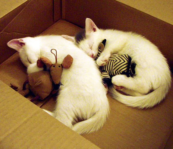 cute-animals-sleeping-stuffed-toys-32