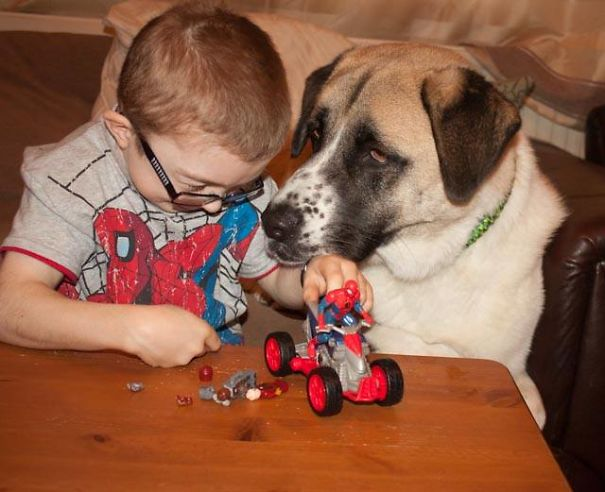 damn-these-onions-insperational-story-of-a-boy-and-his-dog1_