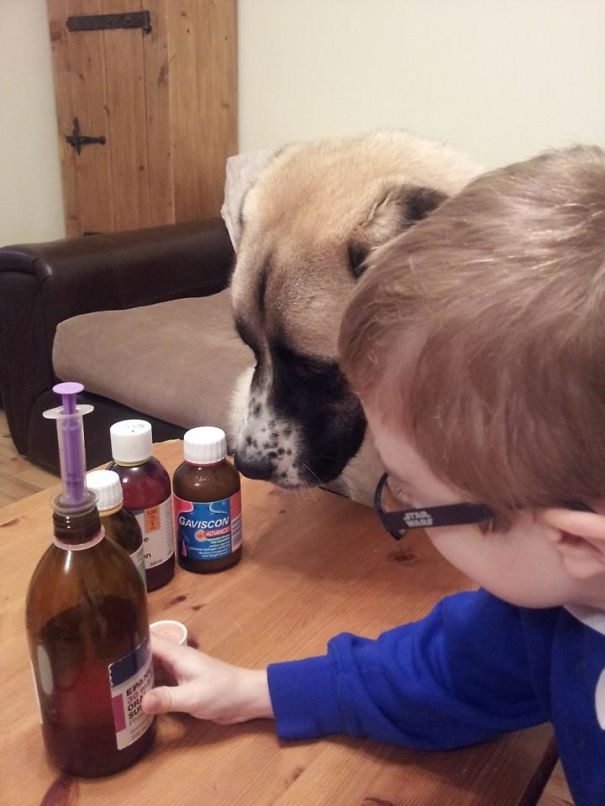 damn-these-onions-insperational-story-of-a-boy-and-his-dog4_