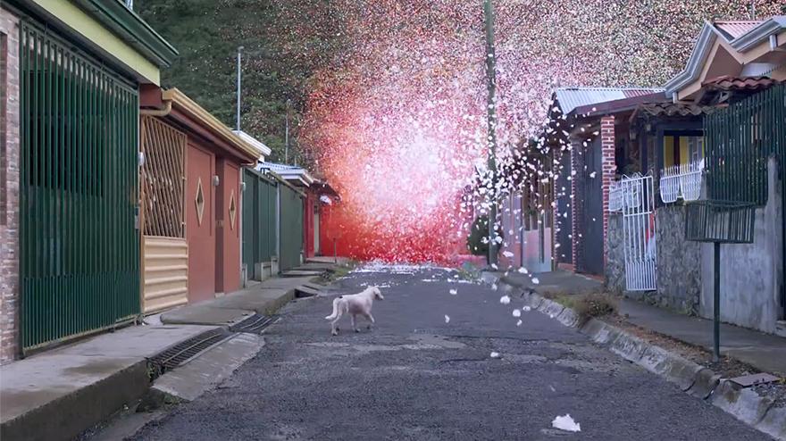 flower-petal-explosion-sony-4k-ultra-hd-5