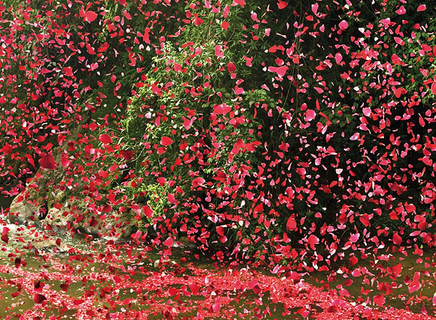flower-petal-explosion-sony-4k-ultra-hd-7