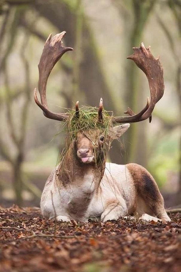 funny-derpy-animals-13