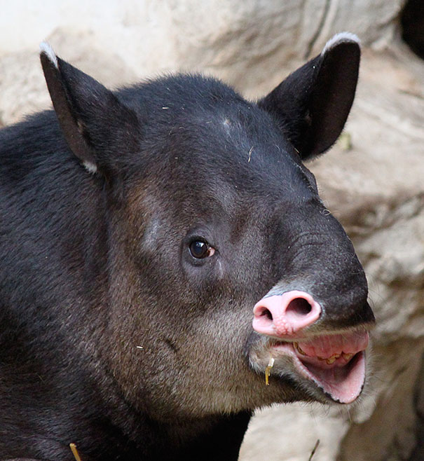 funny-derpy-animals-6