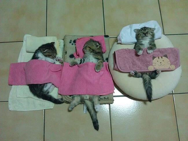 Gatti che dormono ovunque