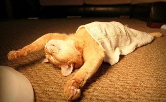 30 gatti che hanno appreso l'arte del sonnellino zen