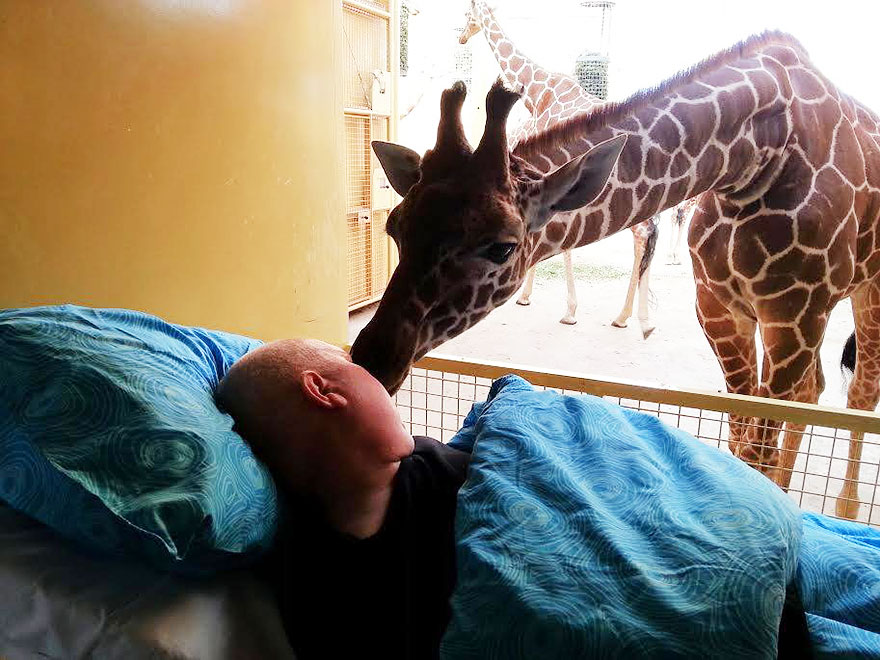 giraffe-kissing-terminally-ill-zoo-keeper-mario-netherlands_