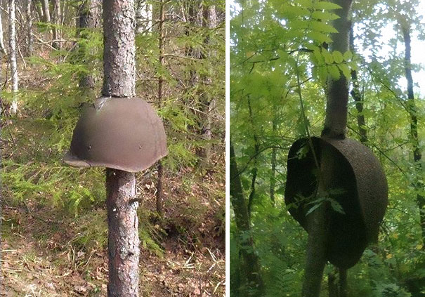 ww2-weapons-helmets-stuck-in-trees-1
