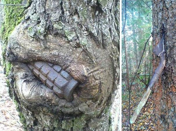 ww2-weapons-helmets-stuck-in-trees-2