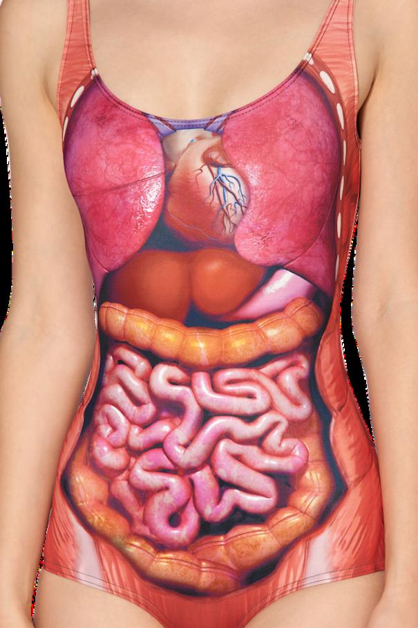 costume-da-bagno-anatomia-torso
