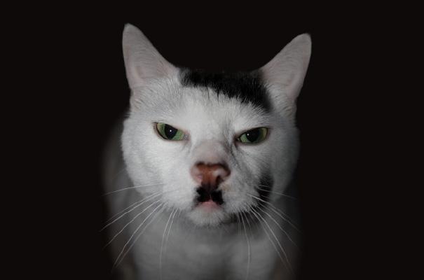 animali-con-baffi