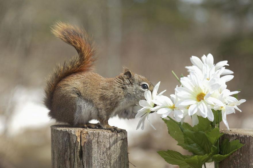 scoiattoli-cinciallegre