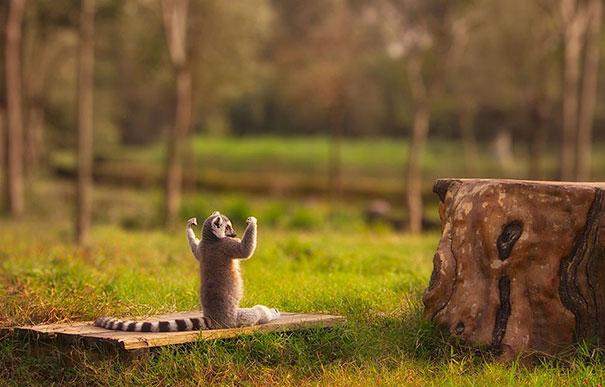animali-divertenti-fanno-yoga