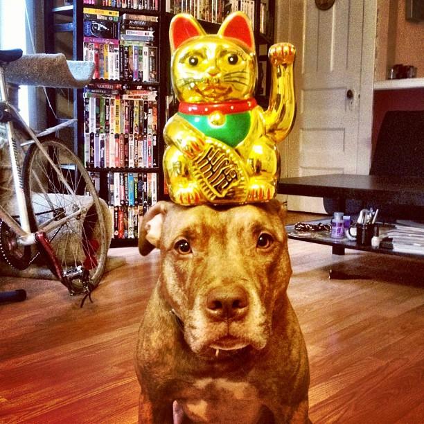 cose-in-equilibrio-sulla-testa-di-un-cane