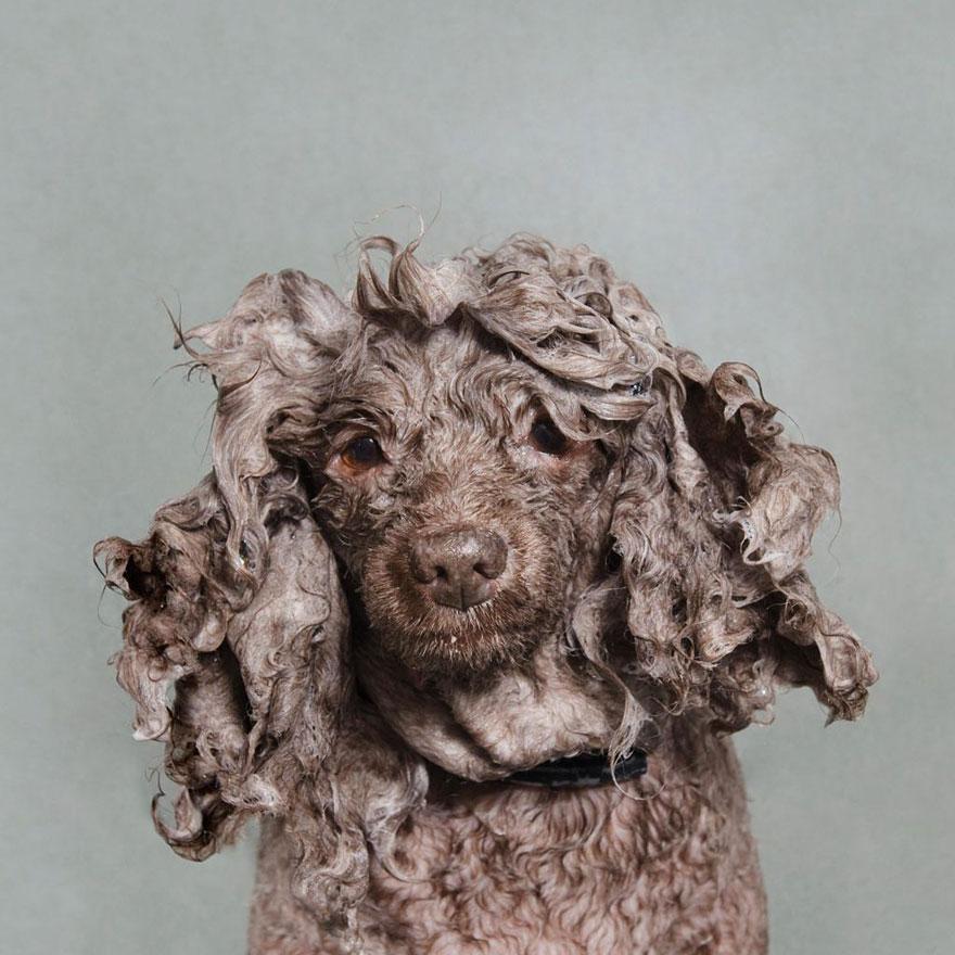 Cane bagnato adorabili foto ritratto di cani che si fanno il bagno di sophie gamand keblog - Cani che non vogliono fare il bagno ...