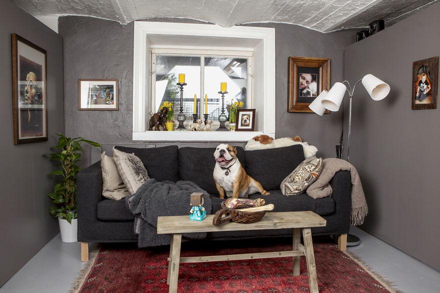 bulldog-cane-pensione-vacanza