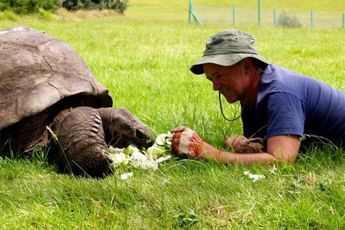 tartaruga-gigante-testuggine-182-anni