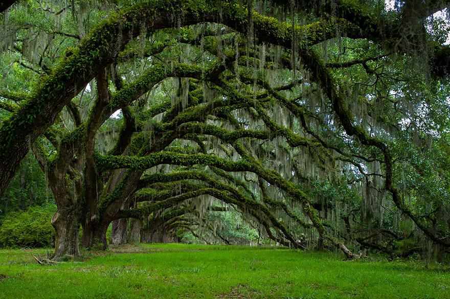 alberi-spettacolari
