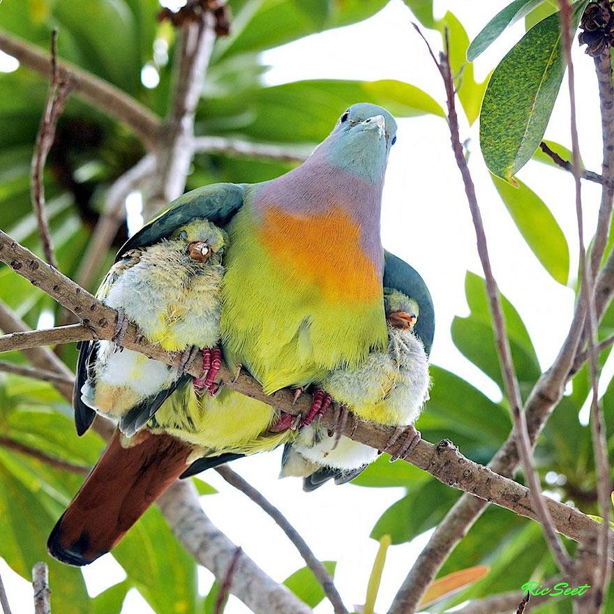 animali-genitori-figli