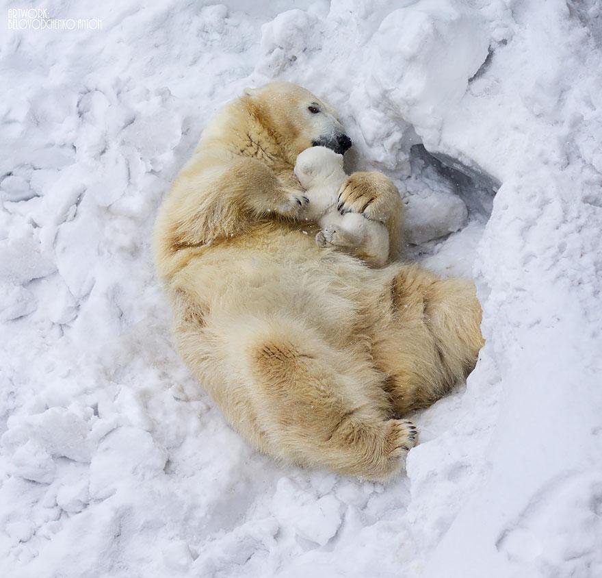 fotografia-orsi-orsetti