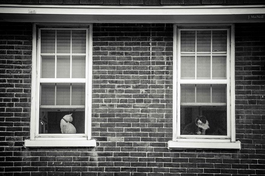 fotografia-bianco-e-nero-gatti