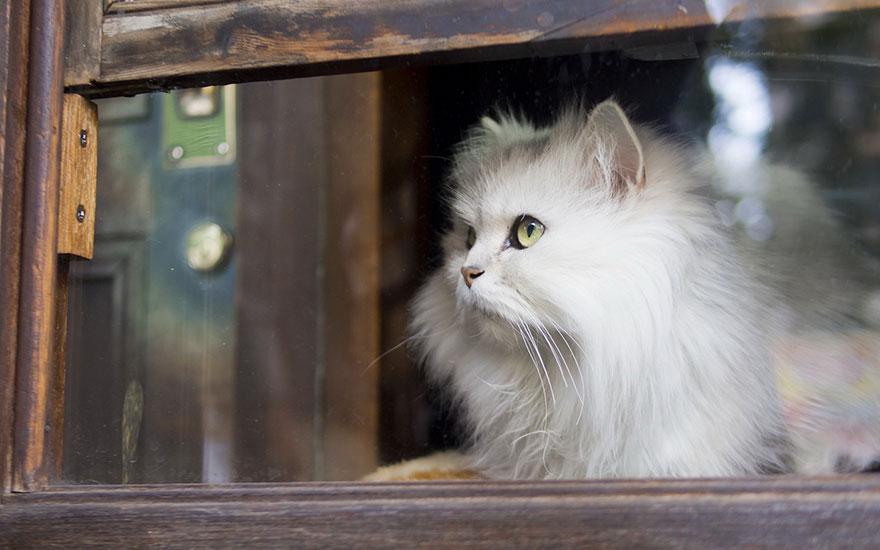 Gatto finestra attesa 57 keblog for Finestra gatto